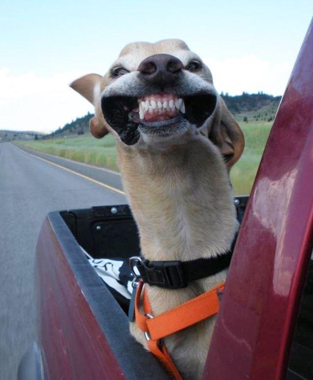 chien insolite humour tete dehors sortie voiture