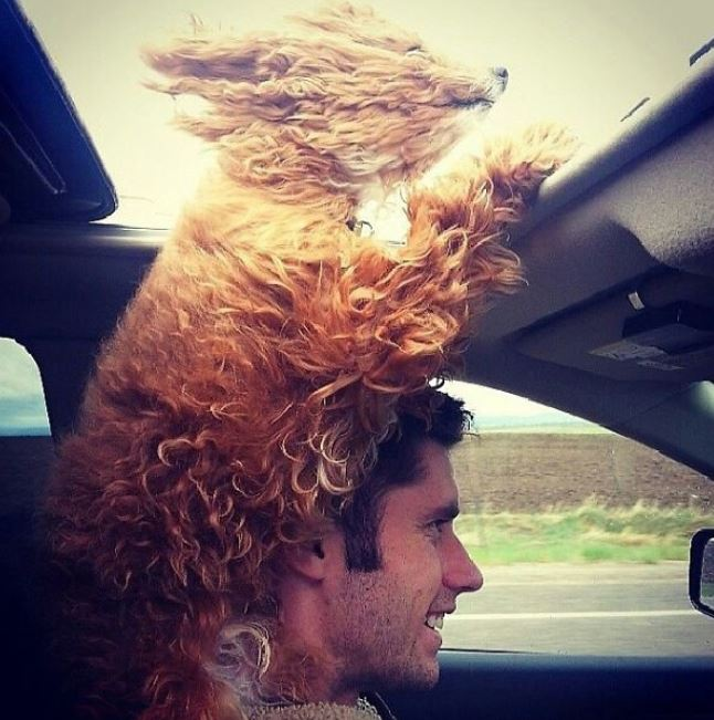 chien tête dehors voiture humour insolite
