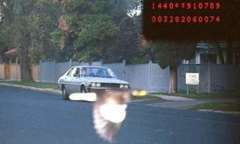 radar automatique oiseau humour insolite